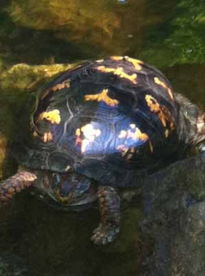 Birds aren't the only animals seen in the backyard; turtles enjoy the protected habitat, too.