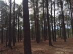 The land of the long leaf pine